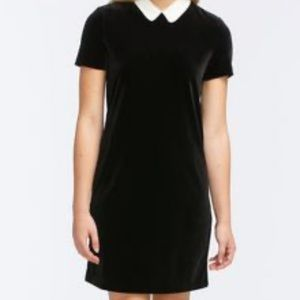 Shift Dress with White Collar